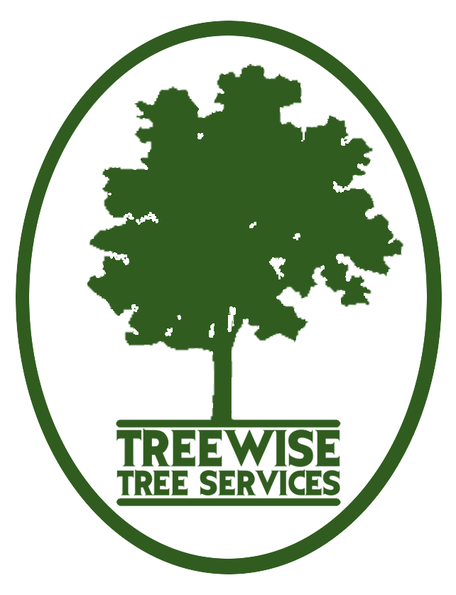 Treewise Tree Services: Tree Surgeons in Sutton Coldfield